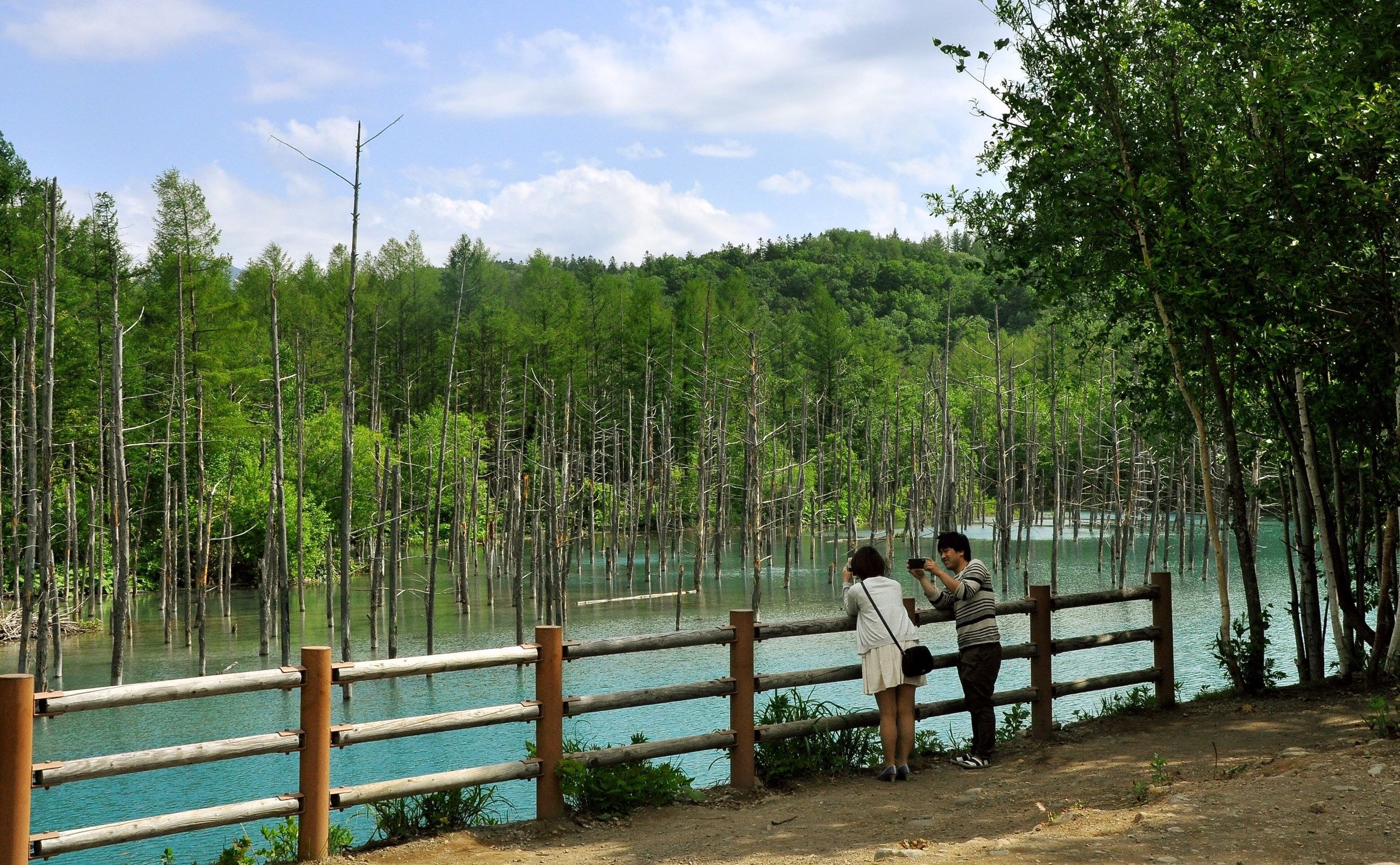 tree, railing, water, leisure activity, lifestyles, sky, rear view, full length, men, tranquility, nature, standing, tranquil scene, person, beauty in nature, scenics, lake, togetherness