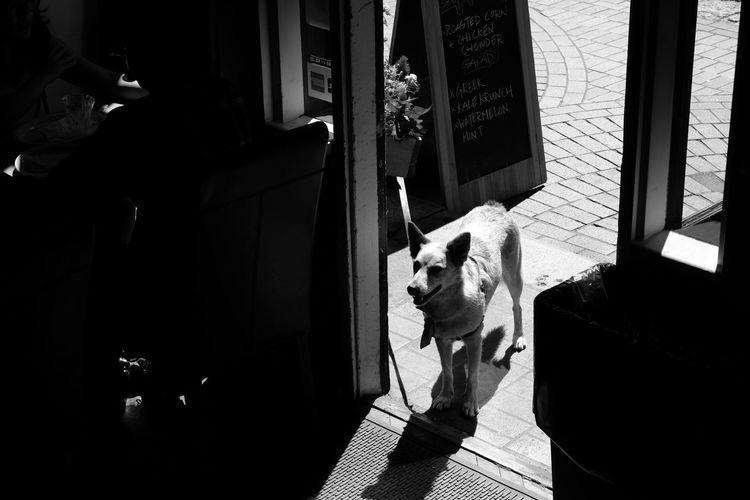 Dog sitting on door