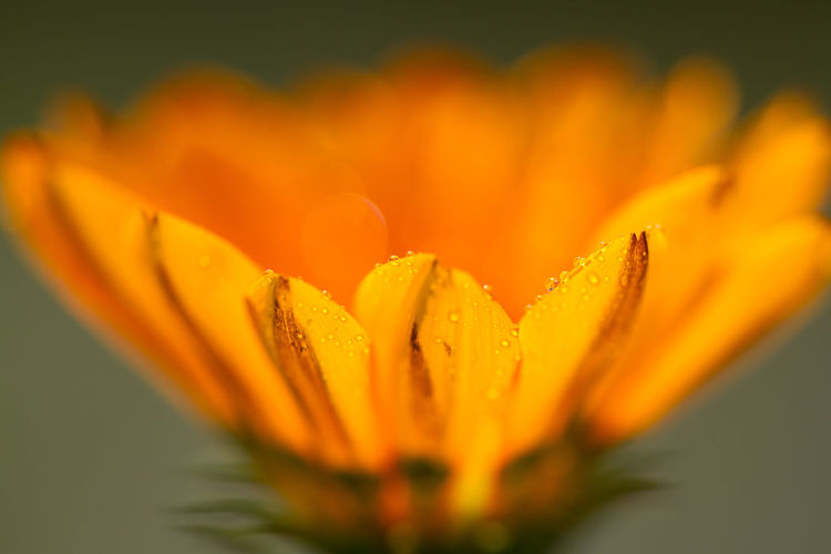 アリの目線 Sigma 180mm F2.8 Flowers Flowerporn The Purist (no Edit, No Filter) Macro Photography Macro_collection Macro