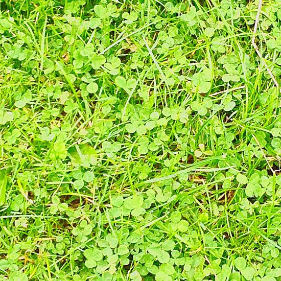 Shades of green Walking Around