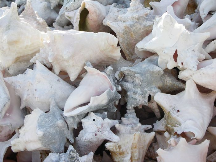 Close-Up Of Heap Of Conch Shells