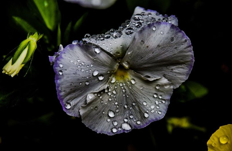 Drop Water Petal Beauty In Nature Flower Head Flower Close-up The Great Outdoors - 2017 EyeEm Awards EyeEmNewHere