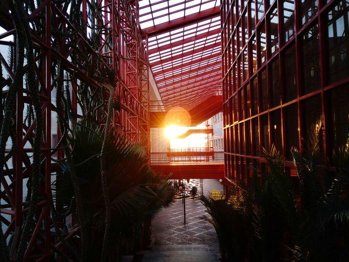 Sunset Sunlight Sun IASBS Mobile Photography Mobilography Sunshine Zanjan