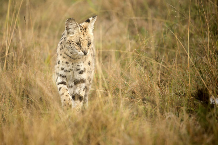 South African safari Animals In The Wild Cheetah Hamerkop South Africa Wildlife & Nature Wildlife Photography Africa African Elephant African Safari Animal Animal Behavior Animal Themes Animal Wildlife Animals In The Wild Birds Day Interaction Nature No People Rhinoceros Secretary Bird Serval  Wildlife