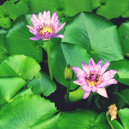 Thailand WatPhraKaew Watphrakaeo タイ ワットプラケーオ Flower