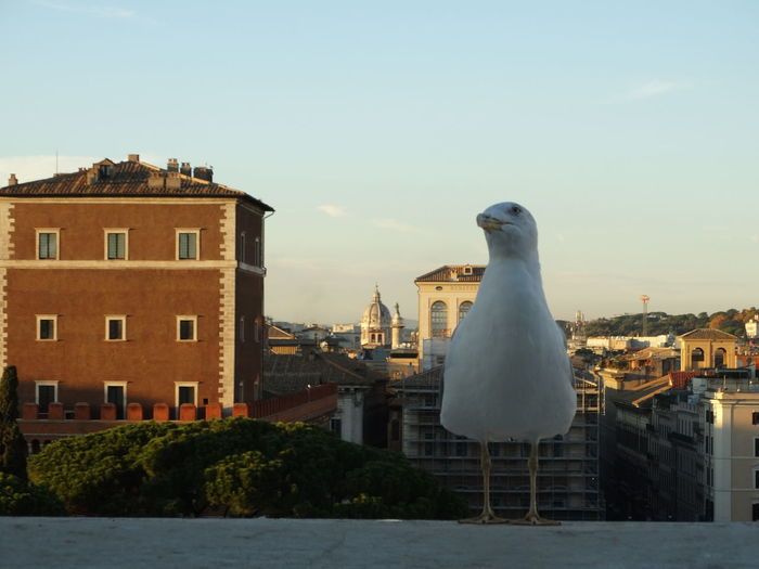 Another Point Of View Rome Animal Themes City Cupolone Gabbiano No People One Animal Rome Italy San Pietro Sky Tree