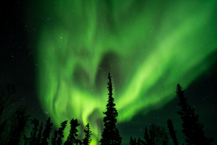 Northern lights (Aurora borealis) with starry sky above forest, Yellowknife, Canada Night Green Color Beauty In Nature Tree Space Astronomy Scenics - Nature Plant Star - Space Sky Tranquility No People Aurora Polaris Illuminated Nature Low Angle View Tranquil Scene Idyllic Dramatic Sky Silhouette