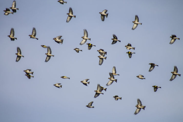 Colony of bird