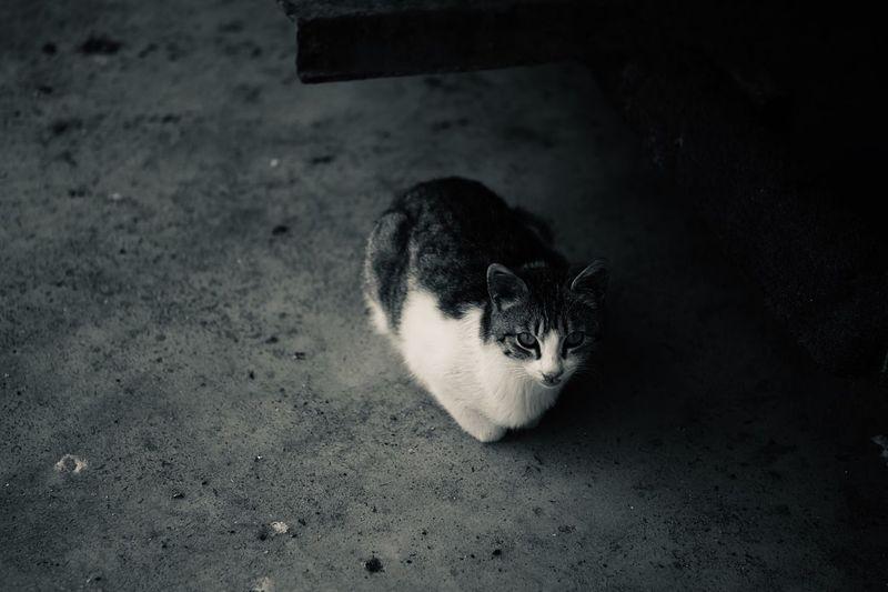 Cat..🌿 One