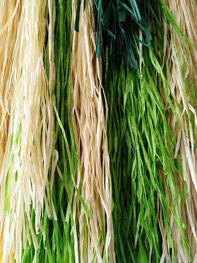 Close-up of wheat growing on grass