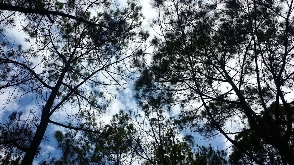 Blue again =))) Colour Of Life Trees Blue Sky Forest