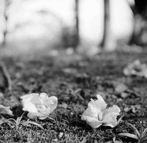 花 Monochrome EyeEm Nature Lover FlowerBorn Collection Japan Brack And White