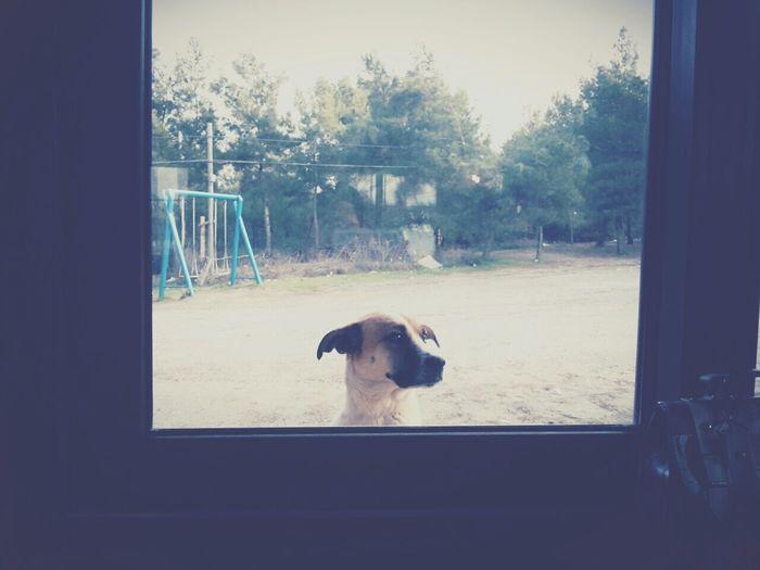 was my friend ? Village Dog Friend Loves Me