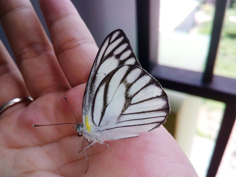Greeting on ma balcony Cheerleading♡ The Way Forward Beauty In Ordinary Things Butterfly Wonderland Butterfly ❤ Happiness Lucky Charms Lucky Day  Blessed & Thankful :) Enjoy The Little Things Mom & Daughter 💎 Motion Effect