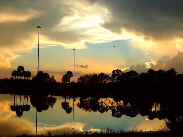 Tree Bird Sunset Water Reflection Silhouette Flying Sky Cloud - Sky