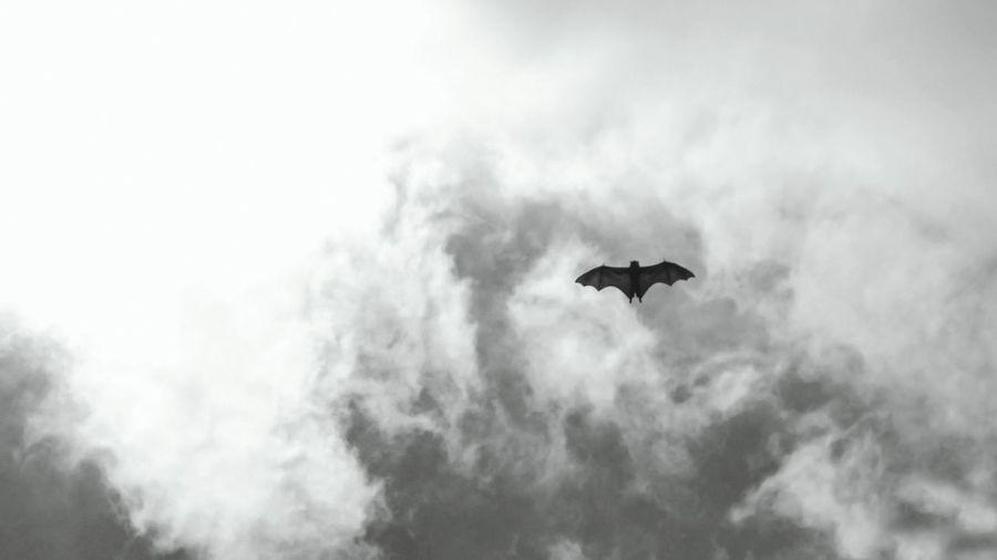 Giant bat in sky monochrome 16x9 Giant Bat In Sky Dark Vertebrate Full Lenght Silhouette Blue Monochrome Blue Monochrome Spread Wings Vulture Flying Mid-air