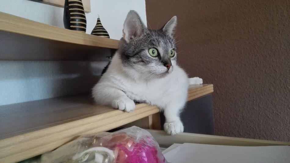 Katzenfoto Catlady Cats 🐱 Cats Cat Eyes Katzenaugen Cat Katze