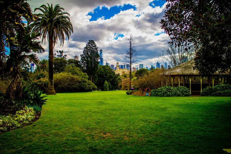 Trees in park with city in background