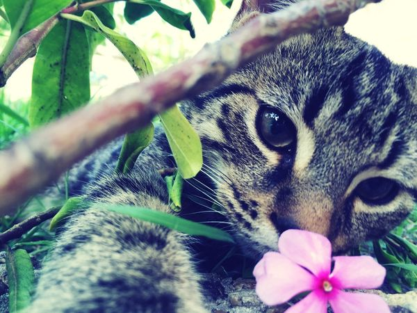 Flowers Taking Photos Playing With The Animals Cat