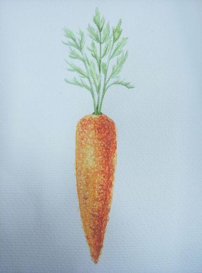Drawing Carrotsare wearing Orange Sweaters Enjoying Life