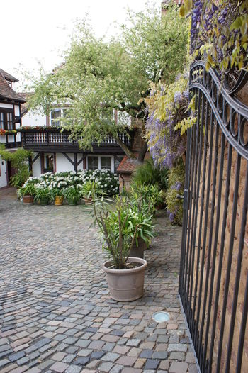 Cobblestone Entrance Exterior Garden German Garden German House Plant Potted Plant