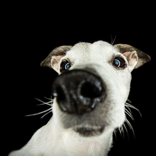 Close-up of dog against black background