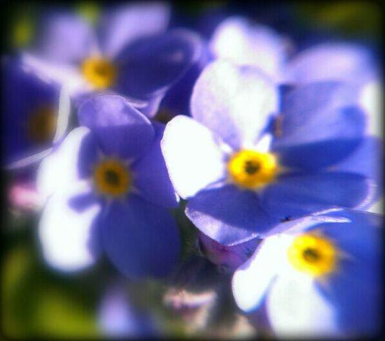 enjoy the sunday Flowers Flowerporn Macro
