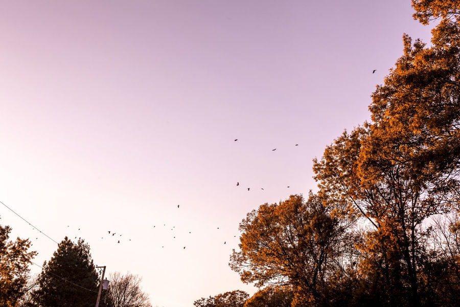 Autumn Illinois Rural America Birds Countryside Flight Flying Migration Rural Scene Sky Sunset