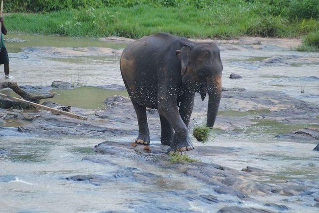 A joyful Elli :) Elephant Bath Elephant Calf Elephant