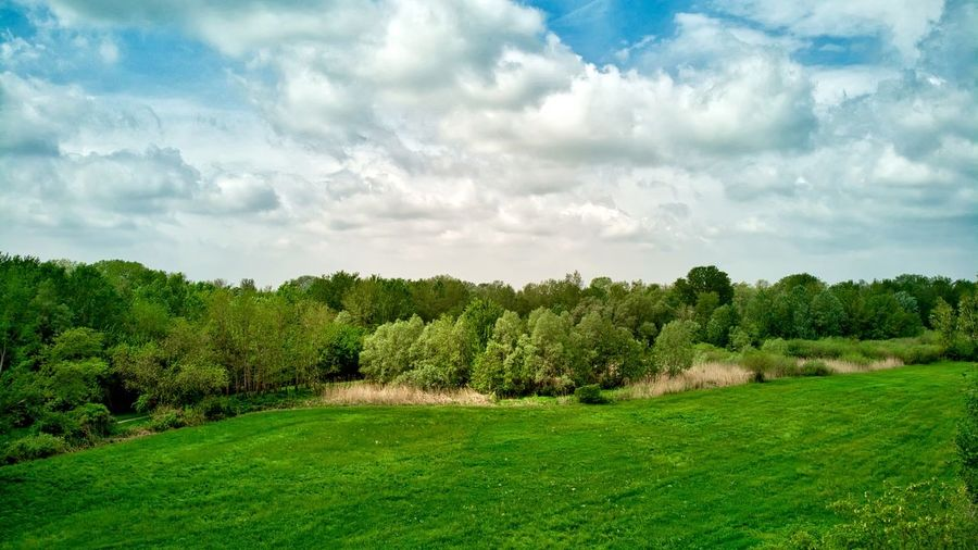 Italy, Mantua: public park Horizontal Cloud - Sky White Clouds Field Countryside Day Daylight Drone  Aerial View Looking Down From Above  Flying Windy Canopy Mavic Plant Tree Green Color Sky Grass Environment Landscape Land Nature Beauty In Nature Tranquil Scene No People Scenics - Nature Growth Tranquility Non-urban Scene Foliage Outdoors