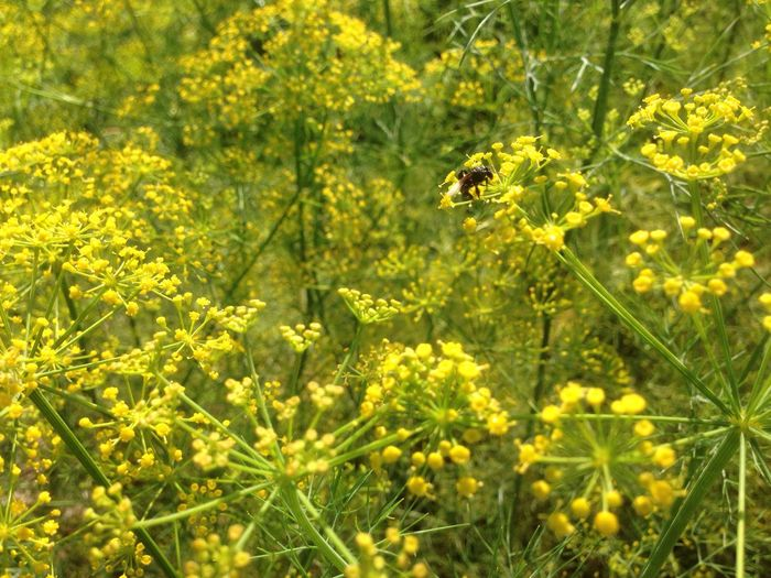 Yellow Nature Animals In The Wild Bee One Animal Day Nature Flower