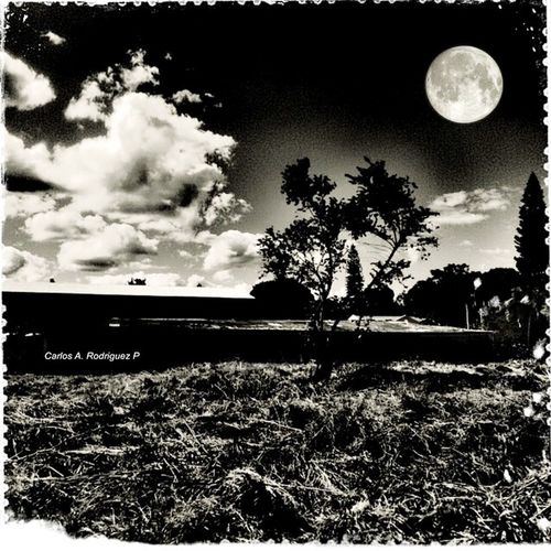 Taking Photos Blackandwhite EyeEm Best Edits Moon Trees Sky Tomando Fotos Blancoynegro Luna Edicion