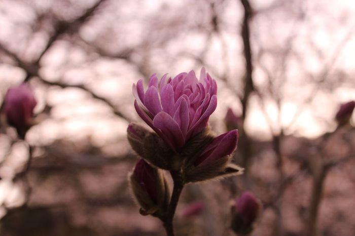 何の花かわからないけど蕾から咲く瞬間が1番綺麗だった The name of a flower wasn't found out, but the front it'll be in full bloom felt very beautifully. Bloom Beatiful Hello World Enjoying Life Canon Awaji Awajishima Japan Today's Hot Look