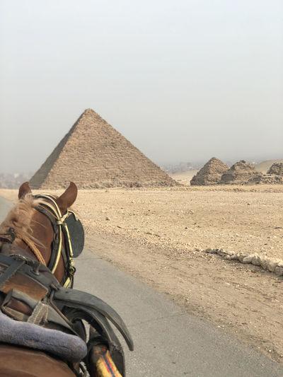 Horse by desert against sky