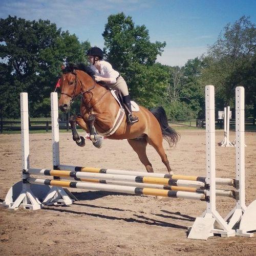 Showjumping Horseshow Equestrian Horses horse jumpers warmblood