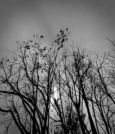 Black And White Trees Tree With Light Bare Tree Beauty In Nature Low Angle View Nature Silhouette Sky Sun Tree Tranquility Tree The Secret Spaces The Secret Spaces Art Is Everywhere
