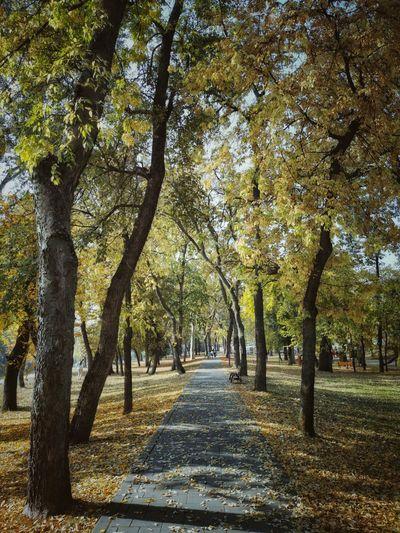 A walk right