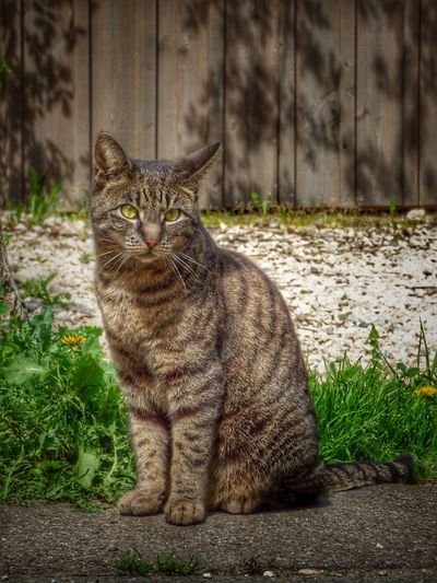 Cat sitting on grass