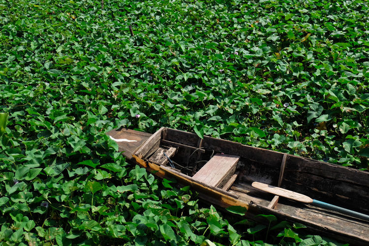 Green with Thai boat Boats⛵️ ThaiLocal Nonthaburi Cannal Green Color Growth Plant Grass No People Nature Day Outdoors