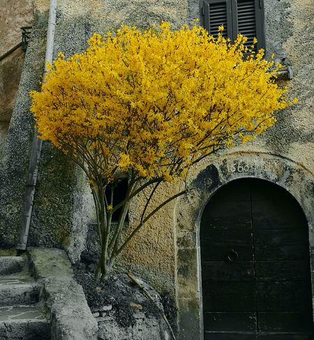 Yellow Transportation Architecture Built Structure No People Outdoors Close-up Day Tree Fragility Nature Spring