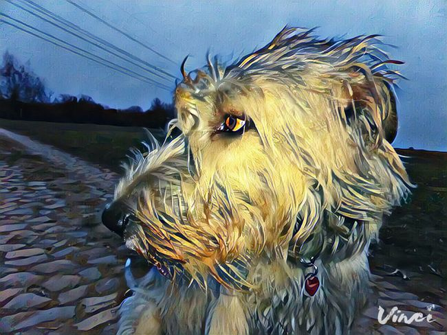 Vinci App One Animal Animal Themes Domestic Animals Outdoors Sky Nature Looking At Camera Animal Head  Cearnaigh Dogs Of Winter Irish Wolfhound Dogs Of EyeEm Eyes Are Soul Reflection Dogslife Winter 2017 February 2017 Showcase February 2017 Dog Winter Take A Walk How's The Weather Today? Portrait Close-up Evening Photography