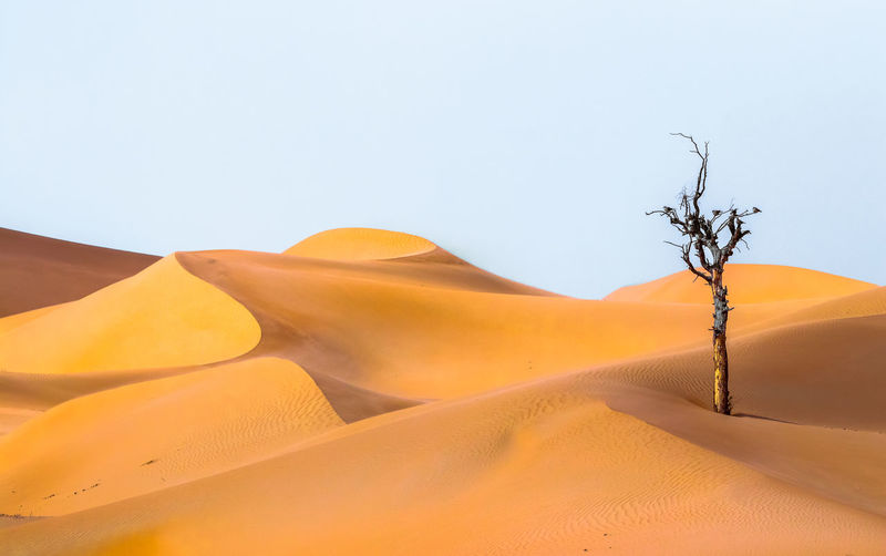 tree in the desert Sand Dune Desert Sand Mountain Accidents And Disasters Clear Sky Environment Sky Landscape