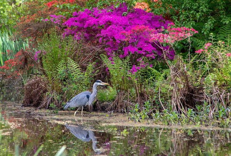 View of bird perching on plant in lake
