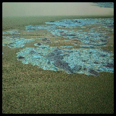 Exceso de algas! :3 CONAGUA Tratamientodeaguas Texcoco Isa practica