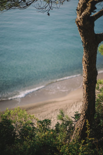 Beach Beauty In Nature Day Growth Land Nature No People Non-urban Scene Outdoors Plant Sand Scenics - Nature Sea Tranquil Scene Tranquility Tree Tree Trunk Trunk Water