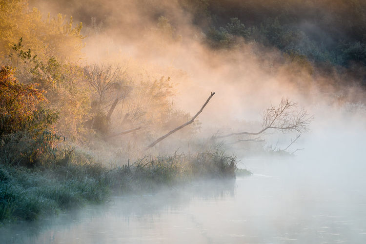Beauty In Nature Burning Environment Fog Forest Land Landscape Morning Nature No People Non-urban Scene Outdoors Plant Scenics - Nature Smog Smoke - Physical Structure Textured Effect Tranquil Scene Tranquility Tree Water