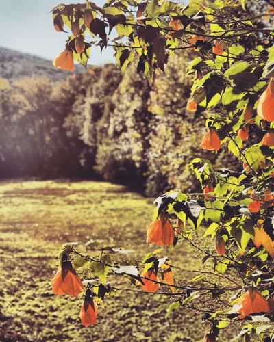 Nature Leaf Growth Tree Day Field Beauty In Nature Plant Outdoors Focus On Foreground No People Sunlight Branch Tranquility Landscape Scenics Fragility Close-up Animal Themes