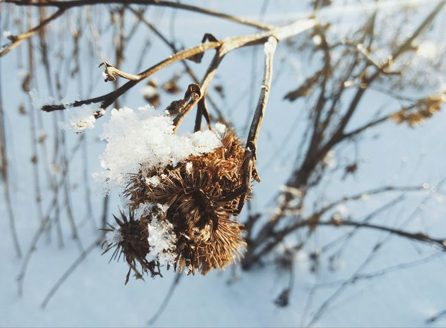 Winter Cold Temperature Frozen Nature Tree Close-up Hanging No People Branch Twig Snow Christmas Outdoors Dried Plant Day