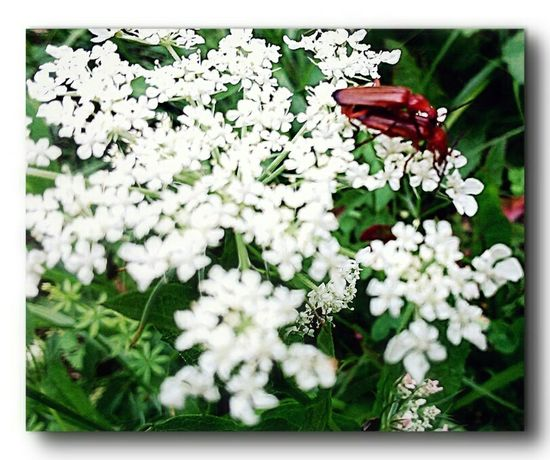 Insects around us. Insect Photography