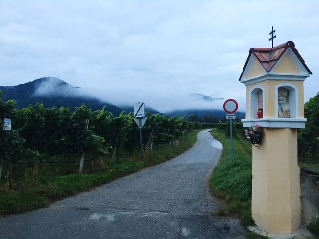 Vineyard in Wachau, Austria The Way Forward Road Mountain Cloud - Sky Sky Atmospheric Mood Wachau Austria Bycicle Outdoors Staff Only Vineyard Agriculture Plantation Harvest Rural Scene Growth Bycicle Tour Fog